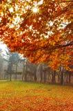 Landscape Royalty Free Stock Photography