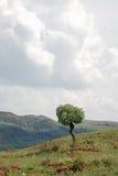 landscape treen Arkivbilder