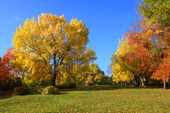 Landscape with trees in aurumn park Royalty Free Stock Photo