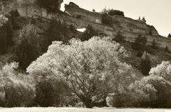 Landscape with trees in blossom and rocks in Soria, Spain. Sepia tone Stock Photo