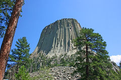 Devil's Tower between trees Stock Image