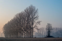 Landscape with trees in the early morning with the frost during the winter season Royalty Free Stock Images