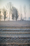 Landscape with trees in the early morning with the frost during the winter season Stock Photography