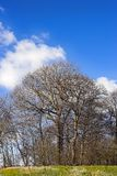 Landscape with trees - early spring Stock Photos
