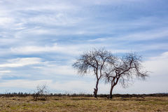 Landscape, trees in a field in spring Stock Photography