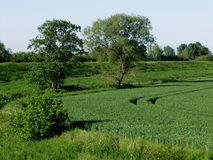 Landscape of trees, fields and crops. Stock Images