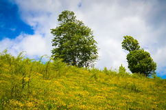 Landscape with trees on flank of hill Stock Image