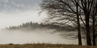 Landscape with trees and fog covered forest Royalty Free Stock Photo