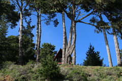 Landscape. Trees and hiding small house on the hill Royalty Free Stock Image
