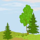 Landscape. Trees on hill. Summer landscape: trees, flowers and the blue sky with white clouds Royalty Free Stock Photography