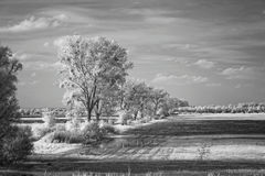 Landscape with trees  in the marsh, infrared Stock Photos