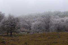 Landscape. Trees mist mountain meadow green grass hoarfrost Stock Photo
