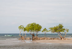 Landscape with trees and ocean. Landscape of a beach with trees and a boat, maumere, flores, indonesia Royalty Free Stock Image