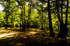 Pastoral Landscape Royalty Free Stock Photography