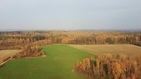 Landscape With Trees With Red and Orange Leaves Forest With Colorful Trees. Drone Flight Forward Over Trees and Meadow. Sunny Autumn Day at Country Side. Aerial stock video