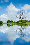 Landscape with trees, reflecting in the water Stock Photos