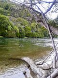 Landscape: the trees and the river stock photography