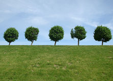 Landscape with trees and sky. In the summer Royalty Free Stock Photography