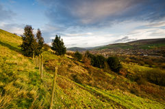 Landscape trees on slop at ashton greater manchest Stock Photography