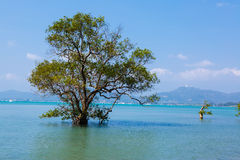 Landscape trees in water in a bay Royalty Free Stock Images