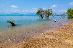 Landscape trees in water in a bay Royalty Free Stock Photos