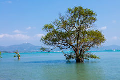 Landscape trees in water in a bay Stock Photos
