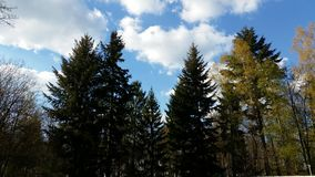 Landscape of trees Royalty Free Stock Images