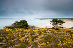 Landscape with trees and yellow flowers with a beach and dark sk. Y in the background, Brittany, France Royalty Free Stock Photography