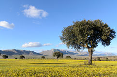 Landscape with trees and yellow flowers Royalty Free Stock Photo