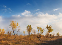 Landscape with trees, yellow leaves and cloudy sky at sunset Royalty Free Stock Image