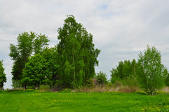Landscape with Treesand green grass Stock Photos