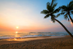 The landscape of tropical beach with palm tree in the sunrise. Beautiful nature and calm Royalty Free Stock Images