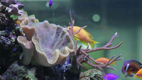Landscape with tropical fishes and corals. Aquarium stock footage