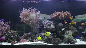 Landscape with tropical fishes and corals. Aquarium stock video