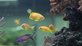 Landscape with tropical fishes and corals. Close up stock video