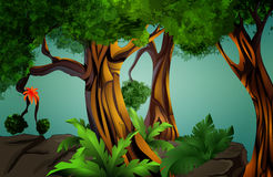 Landscape - tropical forest (jungle) Royalty Free Stock Image
