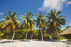 Landscape of tropical island beach with perfect sky, palms, traditional buildings Stock Images