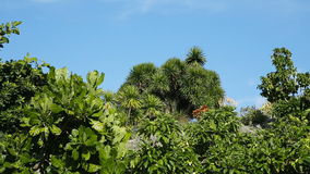 Landscape of tropical plant under blue sky. Jungle of malapascua island.tropical plant trees with green leaves and brown branches in jungle taken from bottom stock video footage