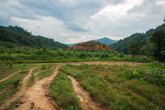 Landscape of tropical plants and paths in Khao Sok sanctuary, Thailan. Landscape view of tropical plants and paths in Khao Sok sanctuary, Thailand Stock Photo