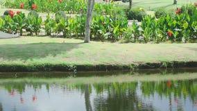Landscape of tropical resort stock footage