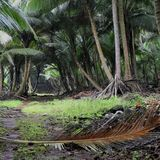 A small path in a tropical forest of sao tome and principe. Landscape of tropical vegetation in sao tome and principe. the high palm trees af the forest are Royalty Free Stock Photo