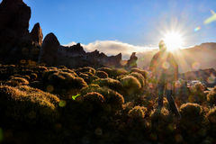 Landscape in Tropical Volcanic Canary Islands Spain Royalty Free Stock Photo