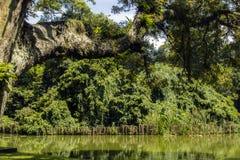 landscape tropiskt Arkivbild