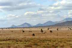 Landscape in Tsavo National Park, Kenya Stock Photography
