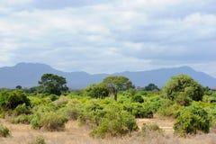 Landscape in Tsavo National Park, Kenya Stock Image