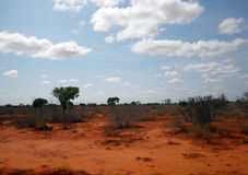 Landscape in Tsavo park Royalty Free Stock Image