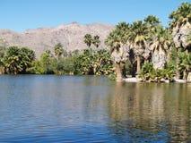 Landscape in Tucson, Arizona. Beautiful landscape of mountains and calm lake in Tucson, Arizona Royalty Free Stock Image