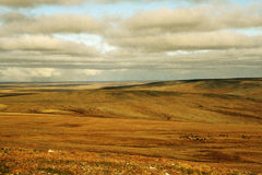 Landscape of tundra Royalty Free Stock Images