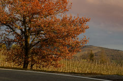 Landscape in the Tuscan Countryside in Chianti near Florence Stock Image