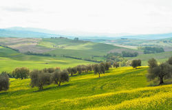 Landscape of tuscan countryside Royalty Free Stock Photography